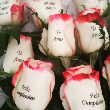 rosas exclusivas_004